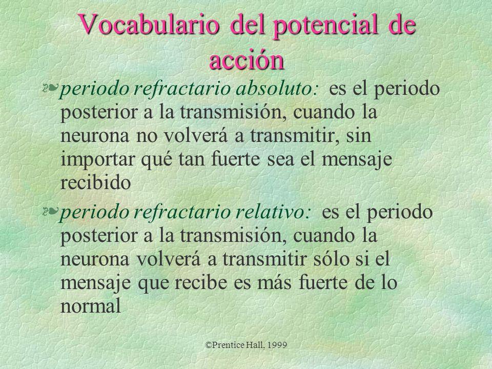 ©Prentice Hall, 1999 Vocabulario del potencial de acción §periodo refractario absoluto: es el periodo posterior a la transmisión, cuando la neurona no