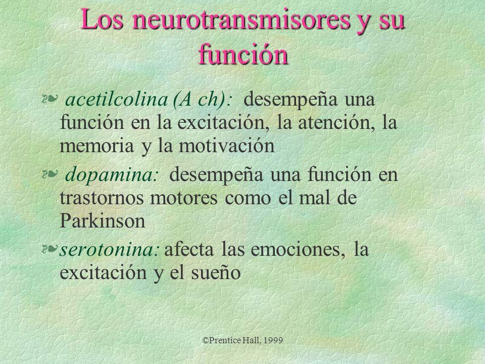 ©Prentice Hall, 1999 Los neurotransmisores y su función § norepinefrina: influye en la vigilia y la excitación, así como en el aprendizaje, la memoria y el estado emocional § endorfinas: reducen el dolor al inhibir las neuronas que transmiten los mensajes de dolor al cerebro