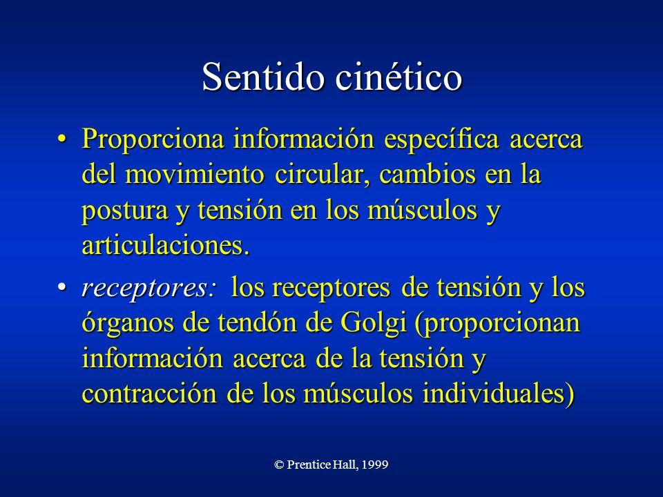 © Prentice Hall, 1999 Sentido cinético Proporciona información específica acerca del movimiento circular, cambios en la postura y tensión en los múscu