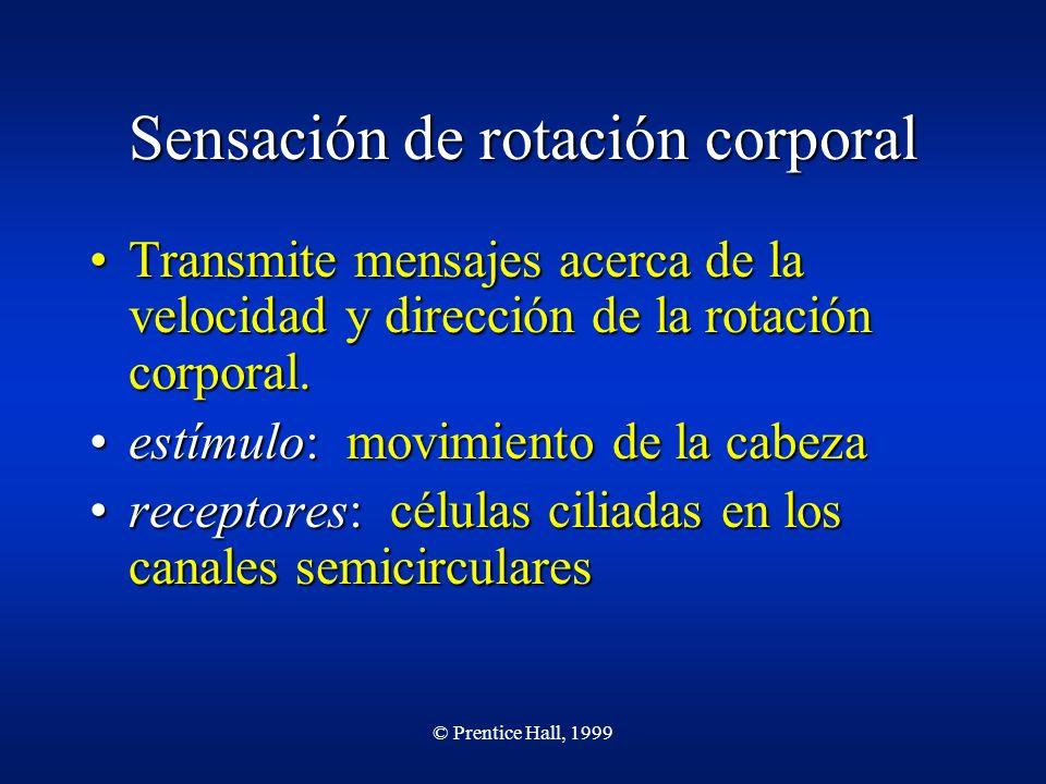 © Prentice Hall, 1999 Sensación de rotación corporal Transmite mensajes acerca de la velocidad y dirección de la rotación corporal.Transmite mensajes