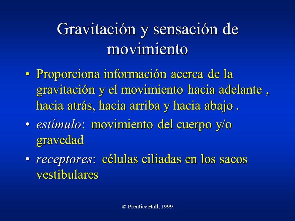 © Prentice Hall, 1999 Gravitación y sensación de movimiento Proporciona información acerca de la gravitación y el movimiento hacia adelante, hacia atr