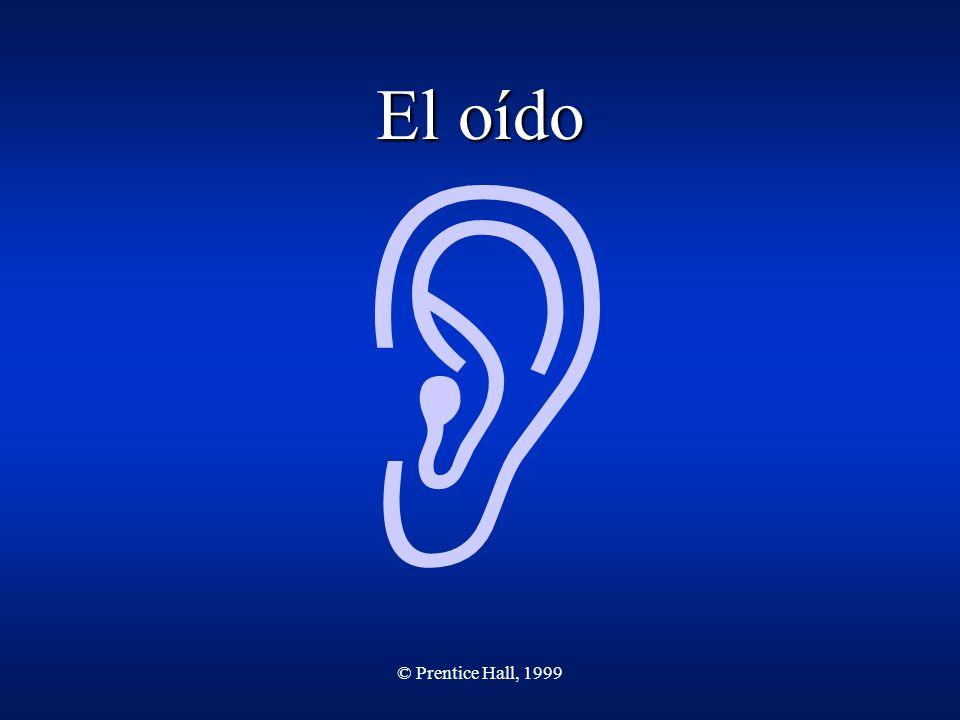 © Prentice Hall, 1999 El oído