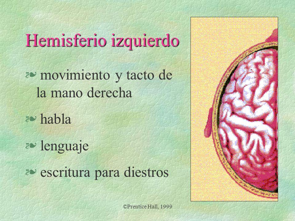 ©Prentice Hall, 1999 § movimiento y tacto de la mano derecha § habla § lenguaje § escritura para diestros Hemisferio izquierdo