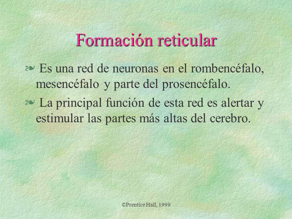 ©Prentice Hall, 1999 Formación reticular § Es una red de neuronas en el rombencéfalo, mesencéfalo y parte del prosencéfalo. § La principal función de