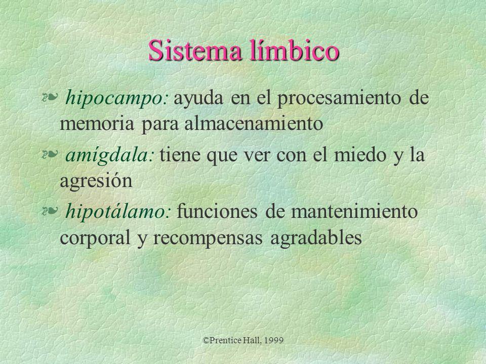 Sistema límbico § hipocampo: ayuda en el procesamiento de memoria para almacenamiento § amígdala: tiene que ver con el miedo y la agresión § hipotálam