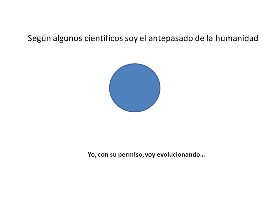 Según algunos científicos soy el antepasado de la humanidad Yo, con su permiso, voy evolucionando…