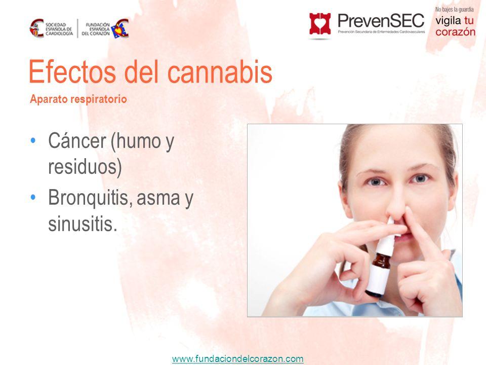 www.fundaciondelcorazon.com Cáncer (humo y residuos) Bronquitis, asma y sinusitis. Efectos del cannabis Aparato respiratorio