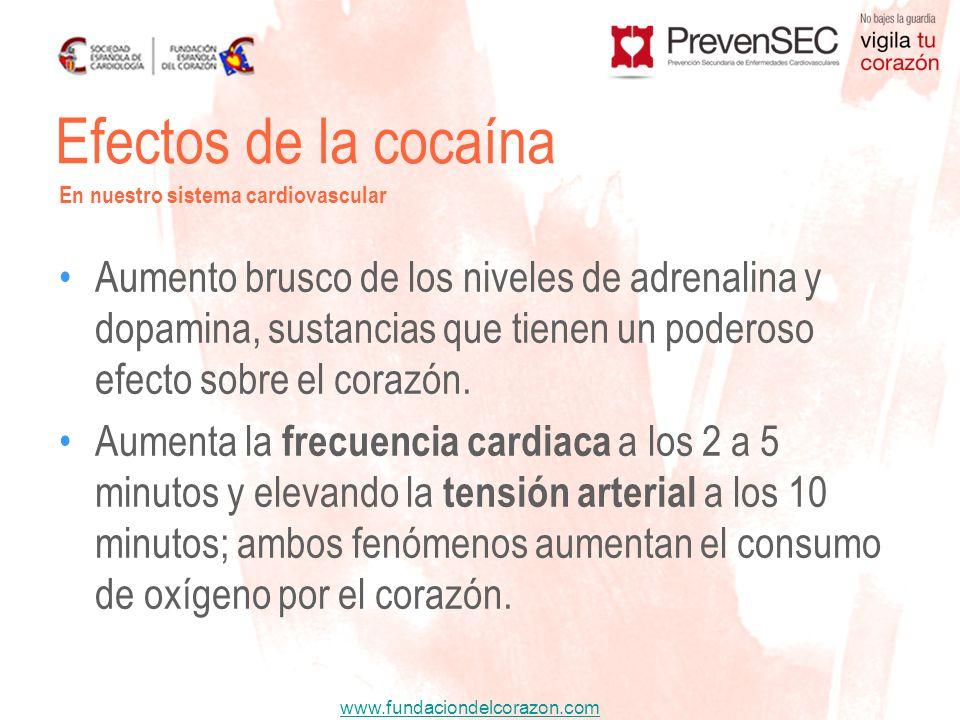 www.fundaciondelcorazon.com Aumento brusco de los niveles de adrenalina y dopamina, sustancias que tienen un poderoso efecto sobre el corazón. Aumenta