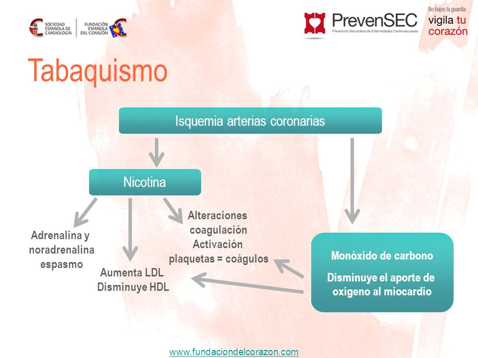 www.fundaciondelcorazon.com Adrenalina y noradrenalina espasmo Alteraciones coagulación Activación plaquetas = coágulos Aumenta LDL Disminuye HDL Isqu