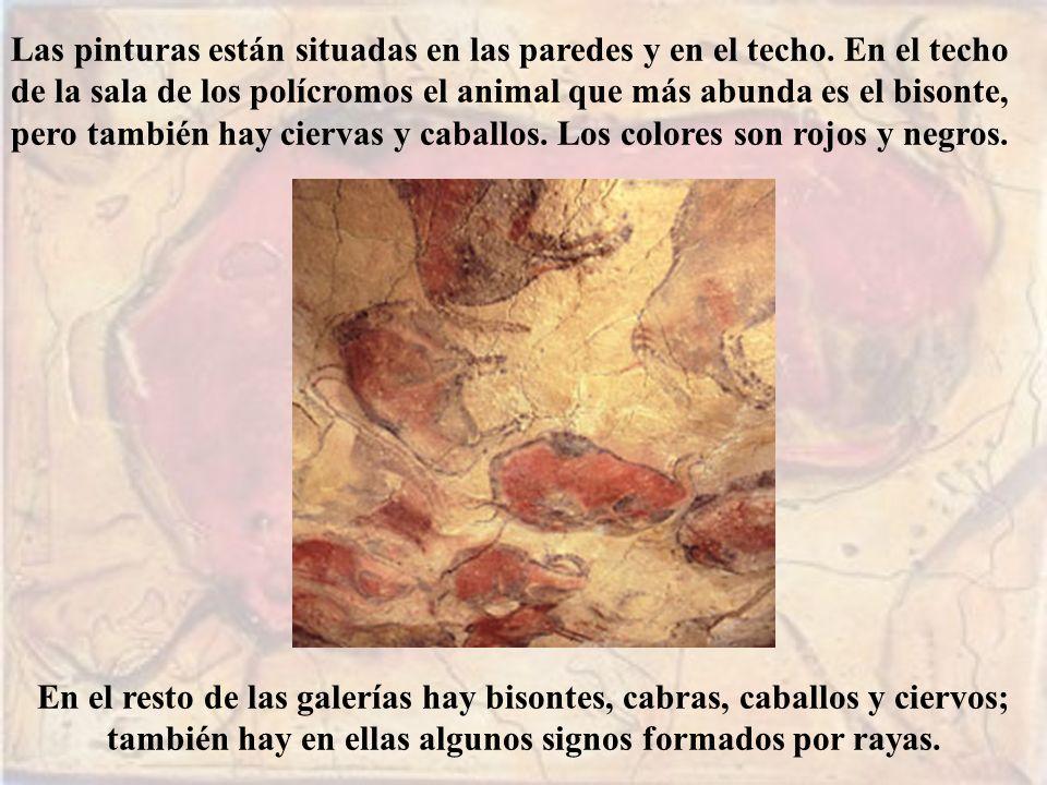Las pinturas están situadas en las paredes y en el techo. En el techo de la sala de los polícromos el animal que más abunda es el bisonte, pero tambié