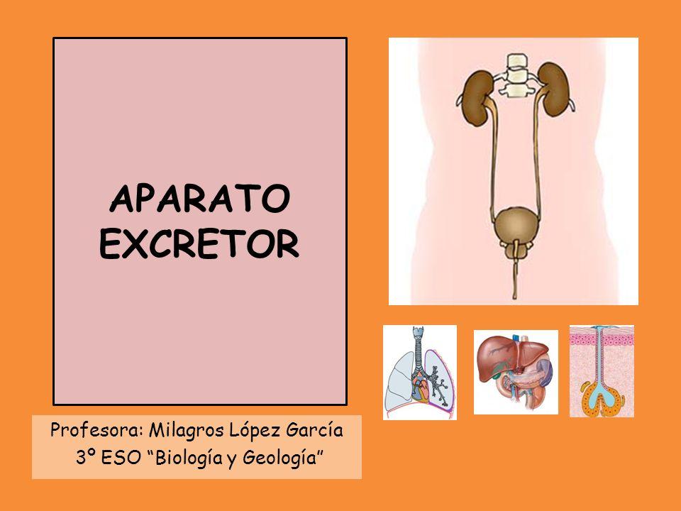 APARATO EXCRETOR Profesora: Milagros López García 3º ESO Biología y Geología