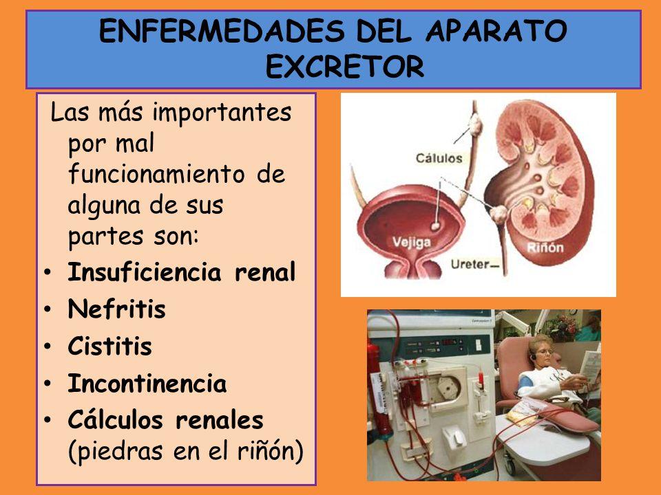Las más importantes por mal funcionamiento de alguna de sus partes son: Insuficiencia renal Nefritis Cistitis Incontinencia Cálculos renales (piedras