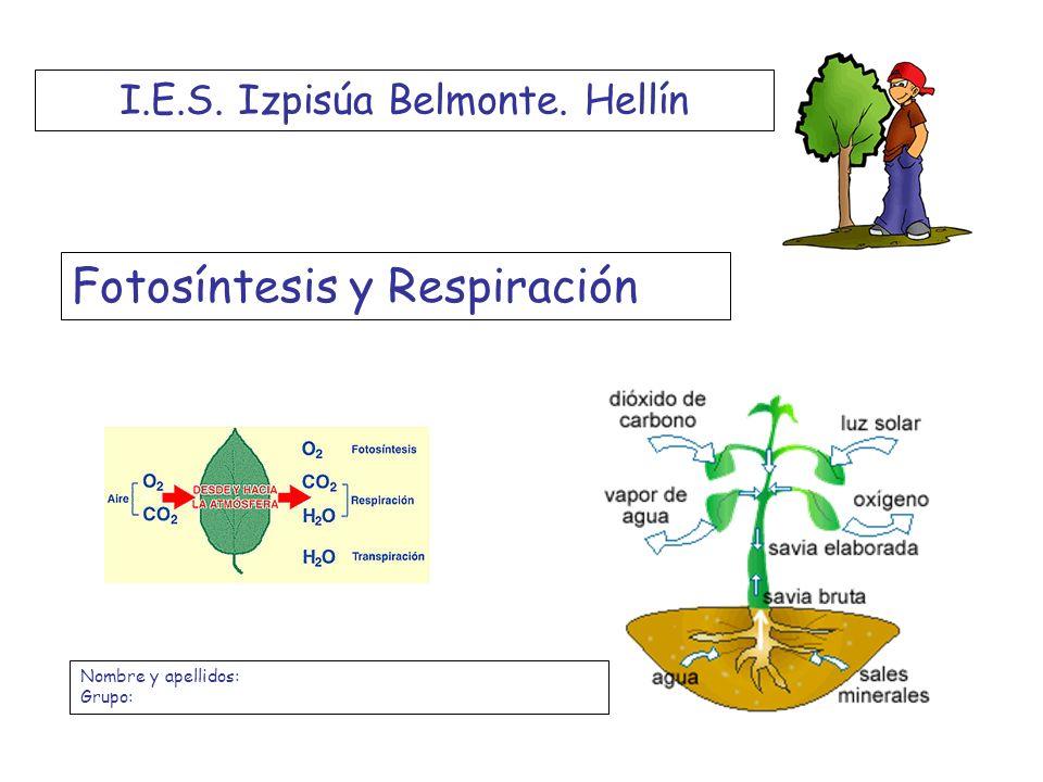 Fotosíntesis y Respiración I.E.S. Izpisúa Belmonte. Hellín Nombre y apellidos: Grupo: