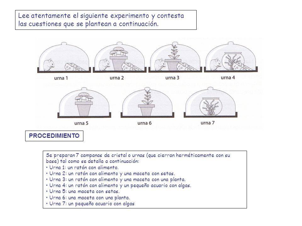 Lee atentamente el siguiente experimento y contesta las cuestiones que se plantean a continuación. Se preparan 7 campanas de cristal o urnas (que cier
