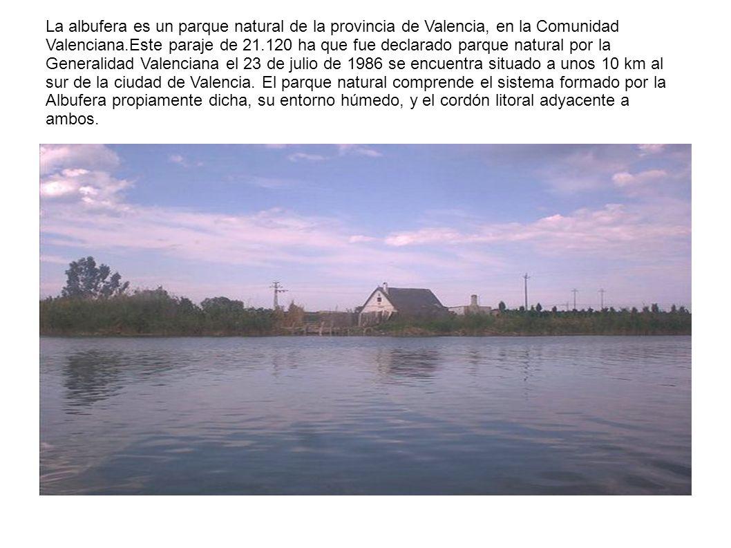La albufera es un parque natural de la provincia de Valencia, en la Comunidad Valenciana.Este paraje de 21.120 ha que fue declarado parque natural por