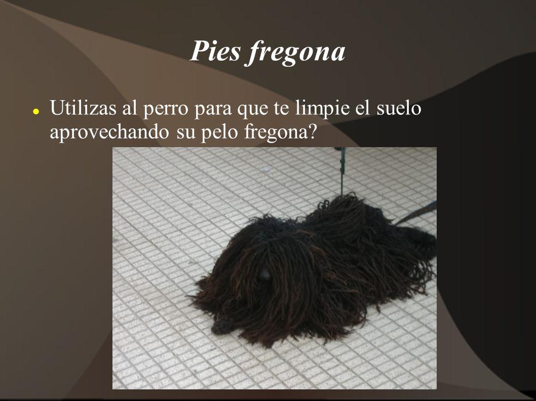 Pies fregona Utilizas al perro para que te limpie el suelo aprovechando su pelo fregona?