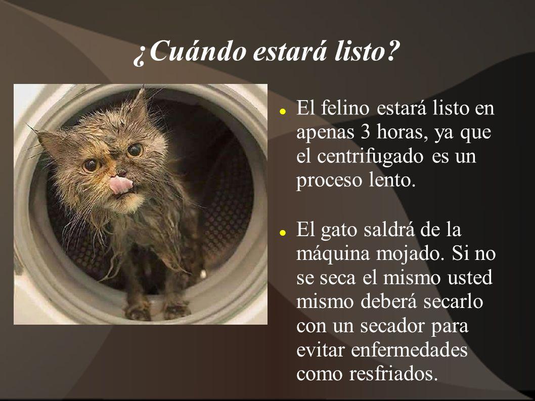 ¿Cuándo estará listo? El felino estará listo en apenas 3 horas, ya que el centrifugado es un proceso lento. El gato saldrá de la máquina mojado. Si no