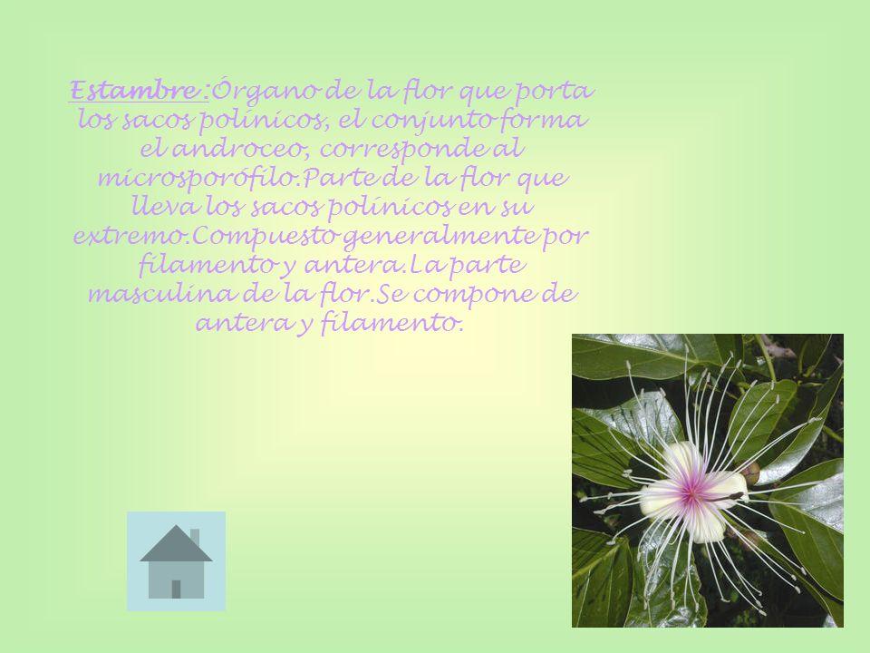 Estambre :Órgano de la flor que porta los sacos polínicos, el conjunto forma el androceo, corresponde al microsporófilo.Parte de la flor que lleva los