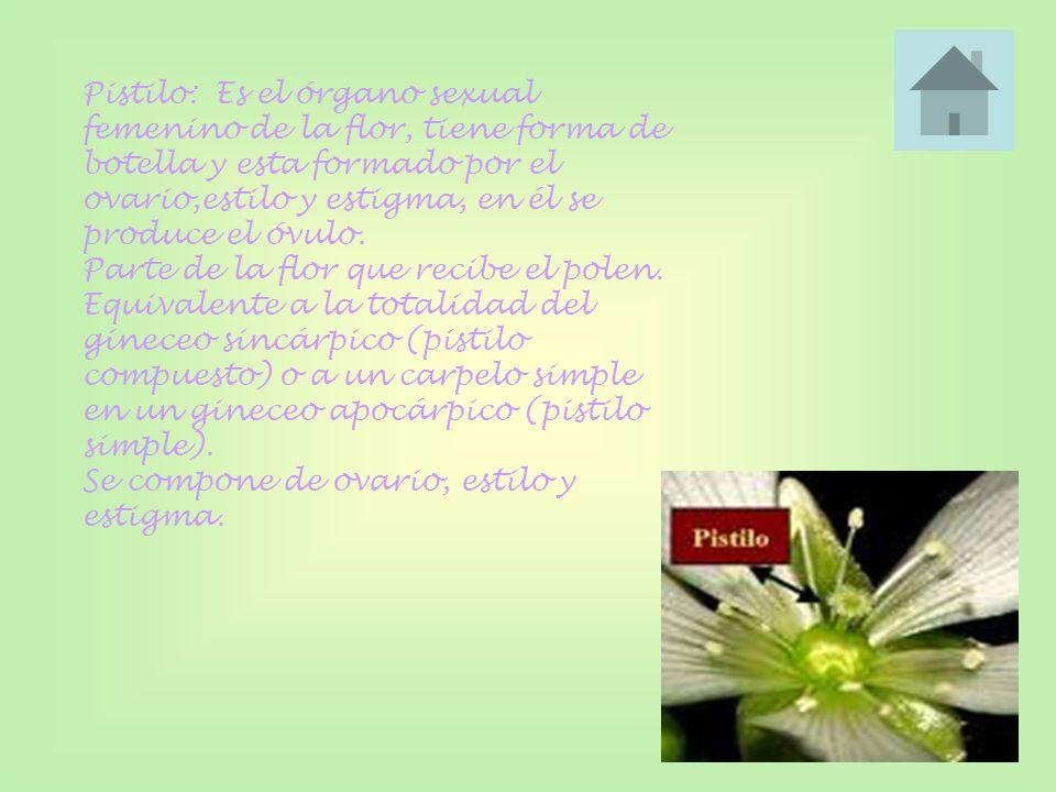 Pistilo: Es el órgano sexual femenino de la flor, tiene forma de botella y esta formado por el ovario,estilo y estigma, en él se produce el óvulo. Par