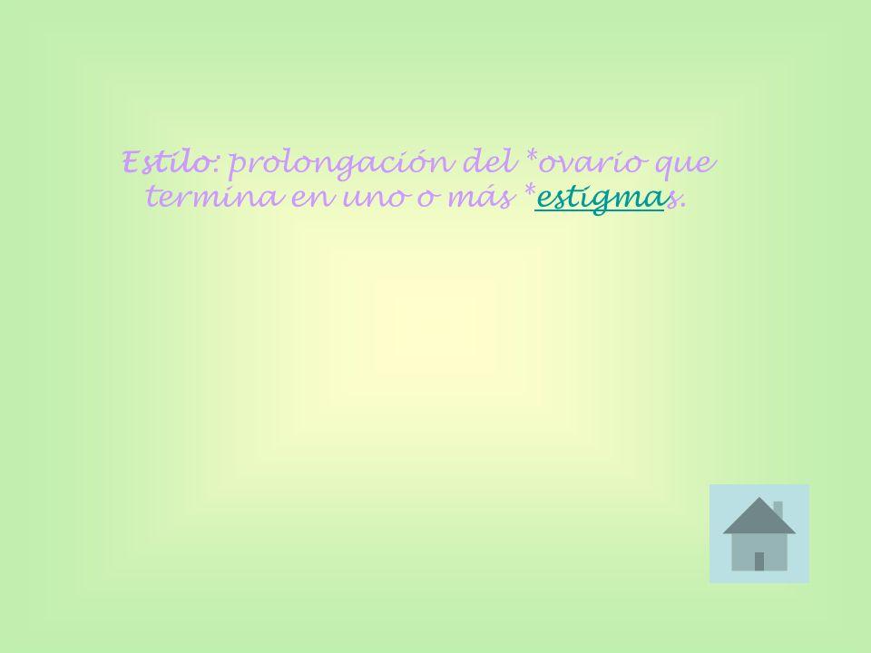 Estilo: prolongación del *ovario que termina en uno o más *estigmas.estigma