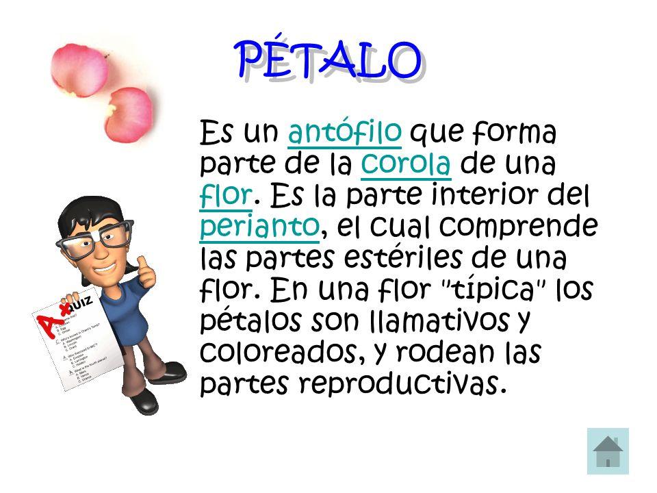 PÉTALO Es un antófilo que forma parte de la corola de una flor. Es la parte interior del perianto, el cual comprende las partes estériles de una flor.