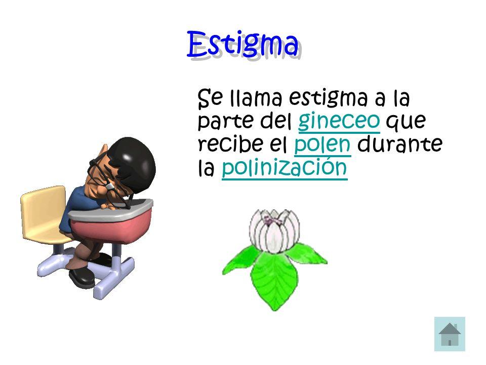Estigma Se llama estigma a la parte del gineceo que recibe el polen durante la polinizacióngineceopolenpolinización