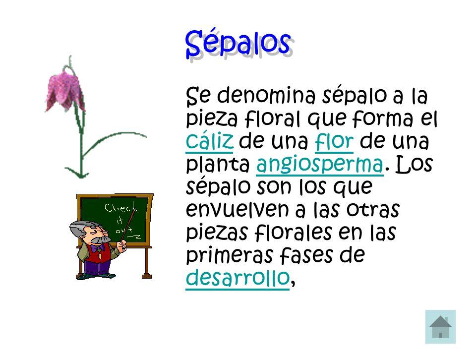 Sépalos Se denomina sépalo a la pieza floral que forma el cáliz de una flor de una planta angiosperma. Los sépalo son los que envuelven a las otras pi