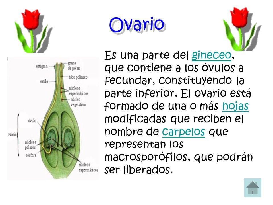 Estilo El estilo de una flor de angiosperma es la prolongación del ovario al final de la cual aparece el estigma.