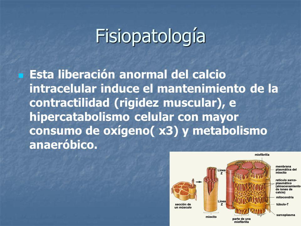 Fisiopatología Esta liberación anormal del calcio intracelular induce el mantenimiento de la contractilidad (rigidez muscular), e hipercatabolismo cel