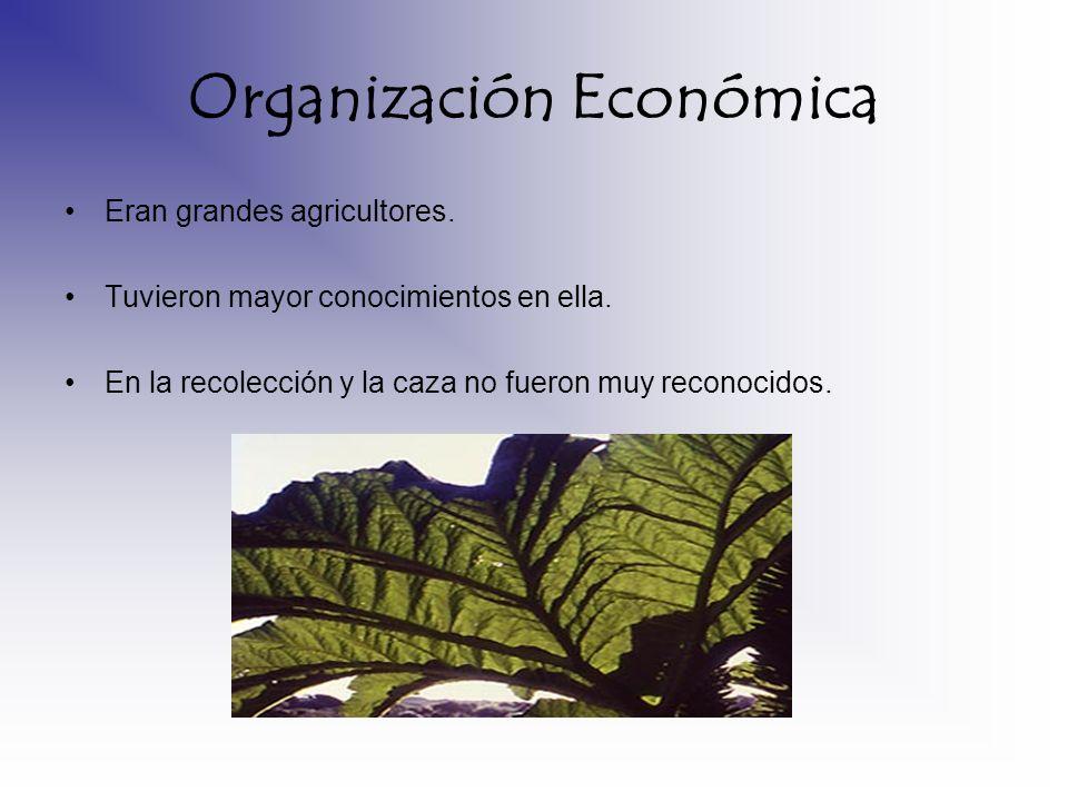 Organización Económica Eran grandes agricultores. Tuvieron mayor conocimientos en ella. En la recolección y la caza no fueron muy reconocidos.