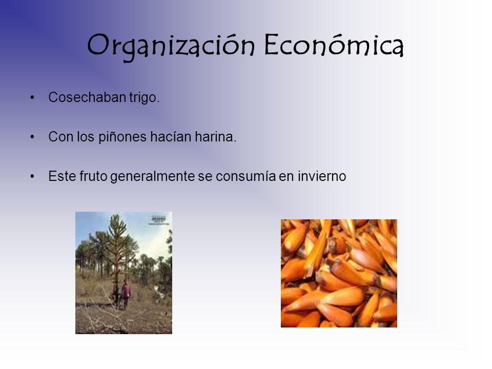 Organización Económica Cosechaban trigo. Con los piñones hacían harina. Este fruto generalmente se consumía en invierno