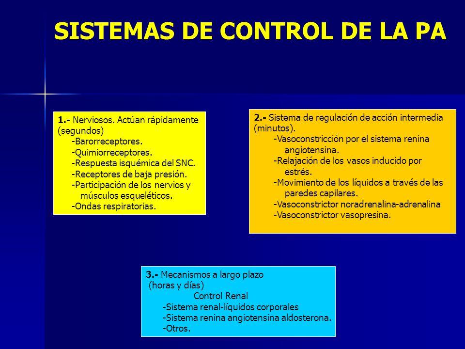 SISTEMAS DE CONTROL DE LA PA 1.- Nerviosos. Actúan rápidamente (segundos) -Barorreceptores. -Quimiorreceptores. -Respuesta isquémica del SNC. -Recepto