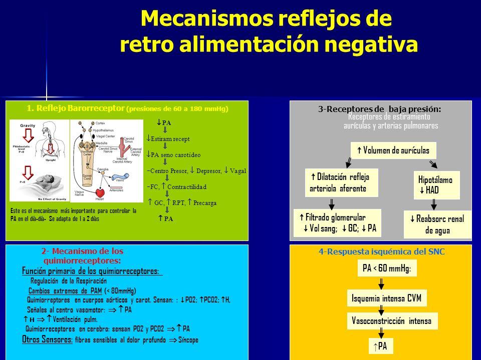 1. Reflejo Barorreceptor (presiones de 60 a 180 mmHg) Mecanismos reflejos de retro alimentación negativa 2- Mecanismo de los quimiorreceptores: 3-Rece