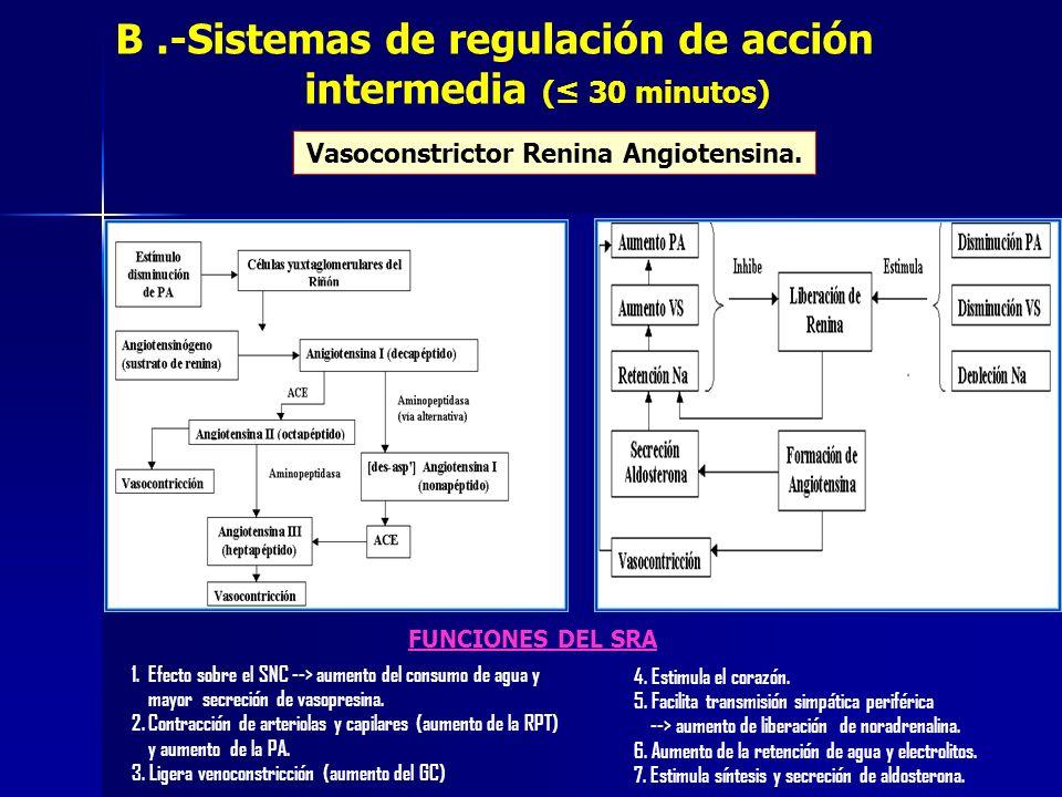 Vasoconstrictor Renina Angiotensina. B.-Sistemas de regulación de acción intermedia ( 30 minutos) 1. Efecto sobre el SNC --> aumento del consumo de ag