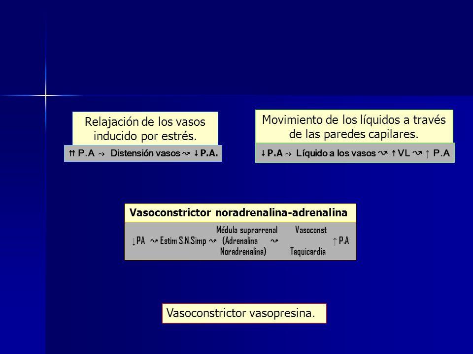 Relajación de los vasos inducido por estrés. Movimiento de los líquidos a través de las paredes capilares. Vasoconstrictor noradrenalina-adrenalina Va