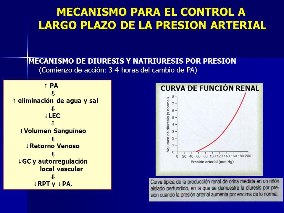 MECANISMO PARA EL CONTROL A LARGO PLAZO DE LA PRESION ARTERIAL MECANISMO DE DIURESIS Y NATRIURESIS POR PRESION (Comienzo de acción: 3-4 horas del camb