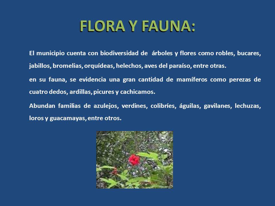 FLORA Y FAUNA: El municipio cuenta con biodiversidad de árboles y flores como robles, bucares, jabillos, bromelias, orquídeas, helechos, aves del para