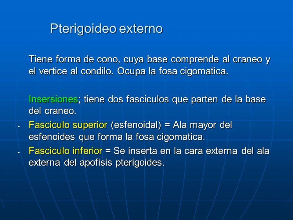 Pterigoideo externo Tiene forma de cono, cuya base comprende al craneo y el vertice al condilo. Ocupa la fosa cigomatica. Insersiones; tiene dos fasci