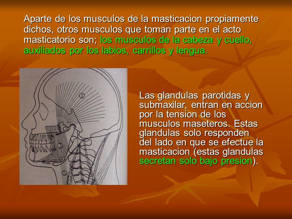 Aparte de los musculos de la masticacion propiamente dichos, otros musculos que toman parte en el acto masticatorio son; los musculos de la cabeza y c
