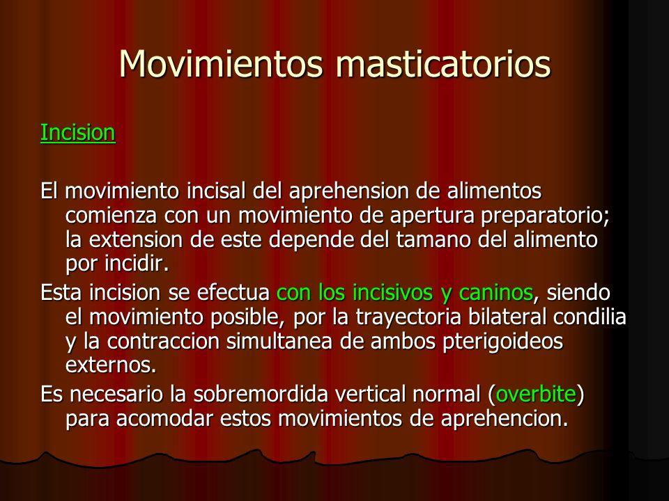 Movimientos masticatorios Incision El movimiento incisal del aprehension de alimentos comienza con un movimiento de apertura preparatorio; la extensio