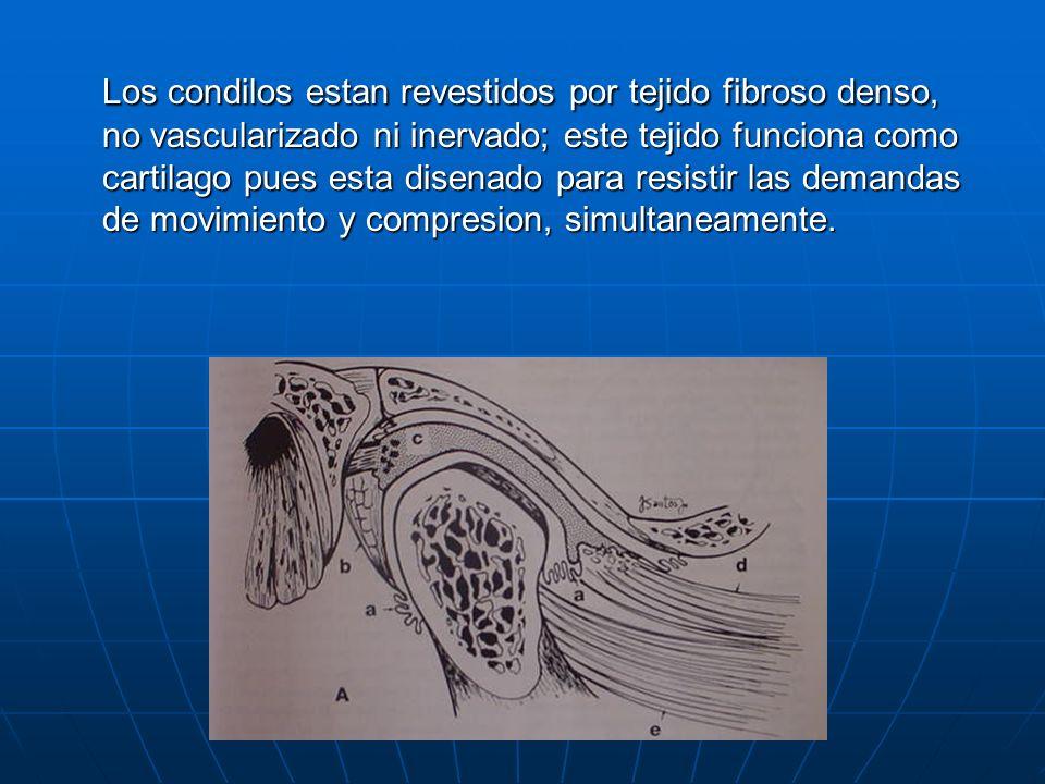 Los condilos estan revestidos por tejido fibroso denso, no vascularizado ni inervado; este tejido funciona como cartilago pues esta disenado para resi