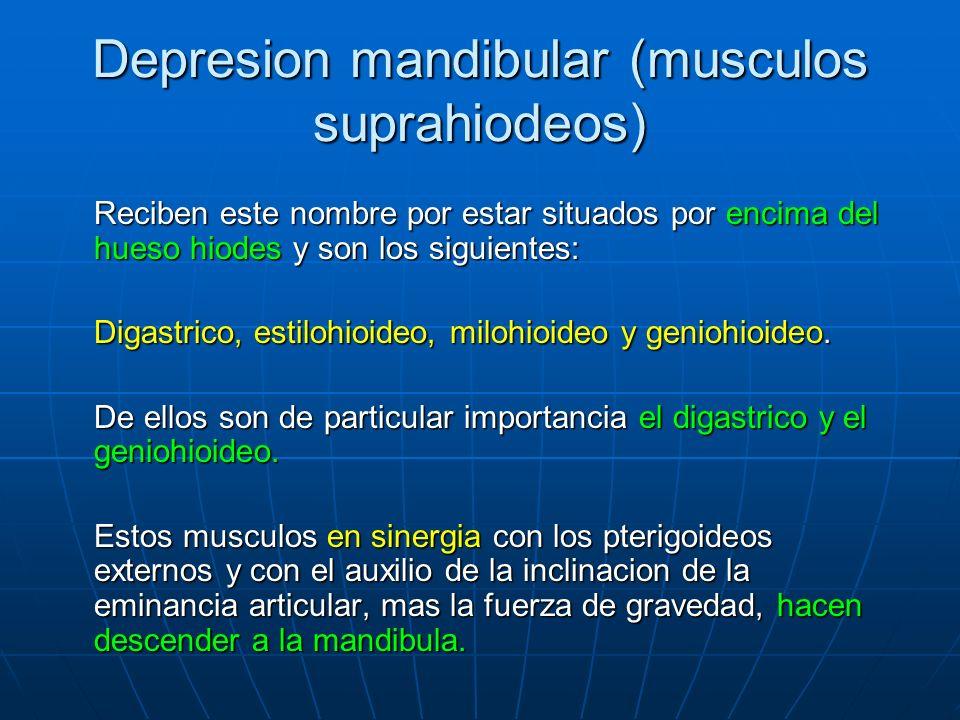 Depresion mandibular (musculos suprahiodeos) Reciben este nombre por estar situados por encima del hueso hiodes y son los siguientes: Digastrico, esti