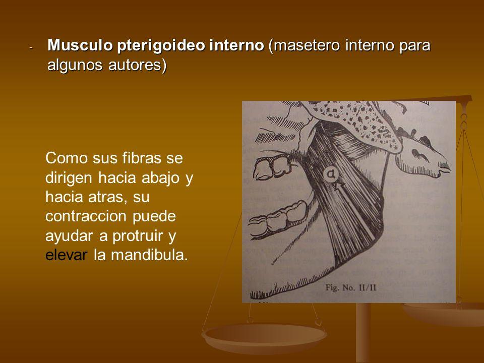 - Musculo pterigoideo interno (masetero interno para algunos autores) Como sus fibras se dirigen hacia abajo y hacia atras, su contraccion puede ayuda