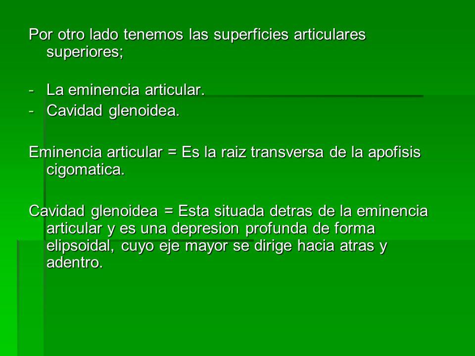 Por otro lado tenemos las superficies articulares superiores; -La eminencia articular. -Cavidad glenoidea. Eminencia articular = Es la raiz transversa