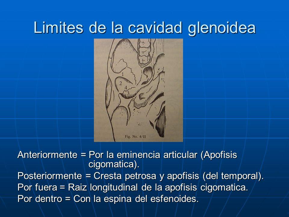 Limites de la cavidad glenoidea Anteriormente = Por la eminencia articular (Apofisis cigomatica). Posteriormente = Cresta petrosa y apofisis (del temp