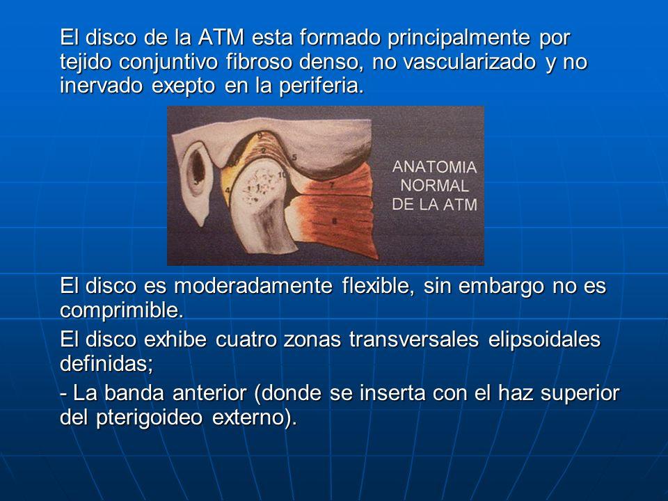El disco de la ATM esta formado principalmente por tejido conjuntivo fibroso denso, no vascularizado y no inervado exepto en la periferia. El disco es