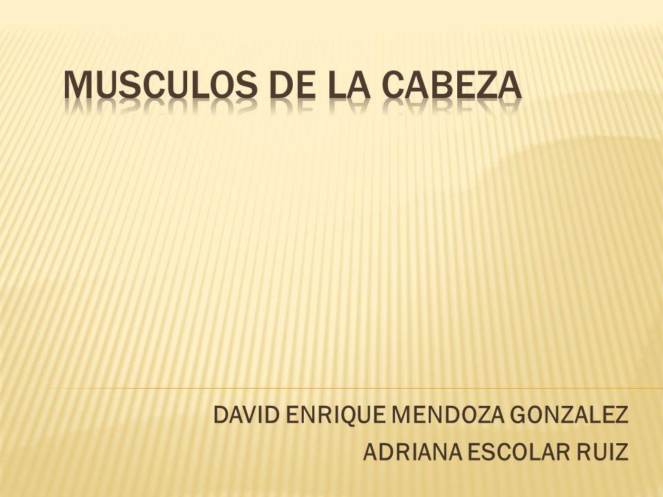 DAVID ENRIQUE MENDOZA GONZALEZ ADRIANA ESCOLAR RUIZ