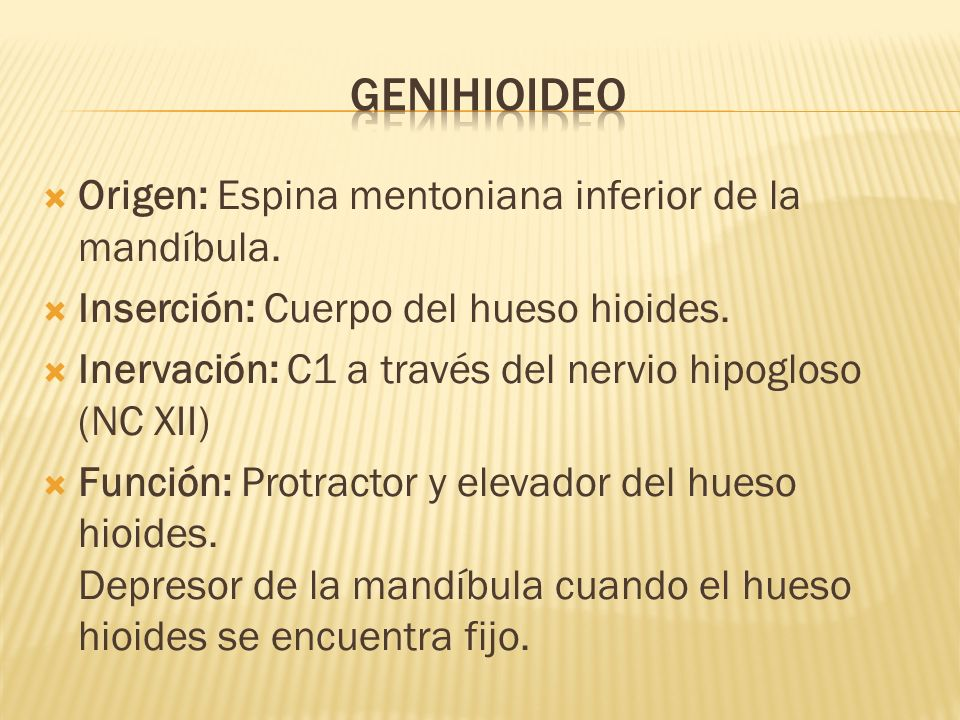 Origen: Espina mentoniana inferior de la mandíbula. Inserción: Cuerpo del hueso hioides. Inervación: C1 a través del nervio hipogloso (NC XII) Función