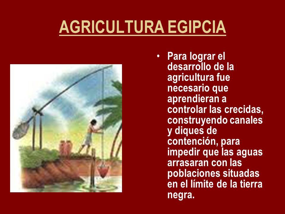 AGRICULTURA EGIPCIA Para lograr el desarrollo de la agricultura fue necesario que aprendieran a controlar las crecidas, construyendo canales y diques