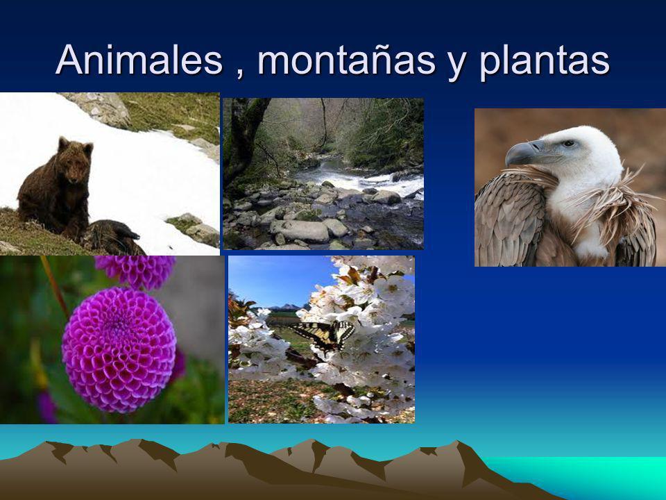 Animales, montañas y plantas